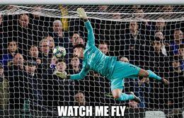 Fly memes